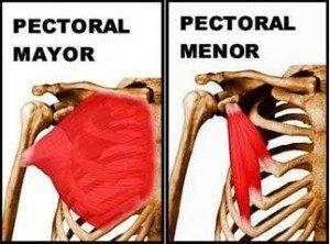 pectoral_mayor_menor