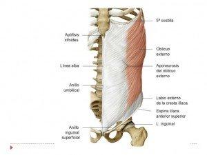 abdomen-y-diafragma-anatoma-10-728