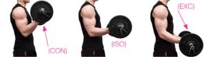 accion-muscular