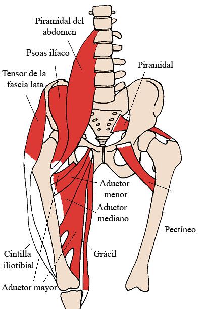 tensor fascia lata
