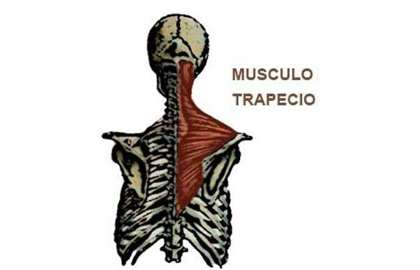 dolor cervical al correr trapecio