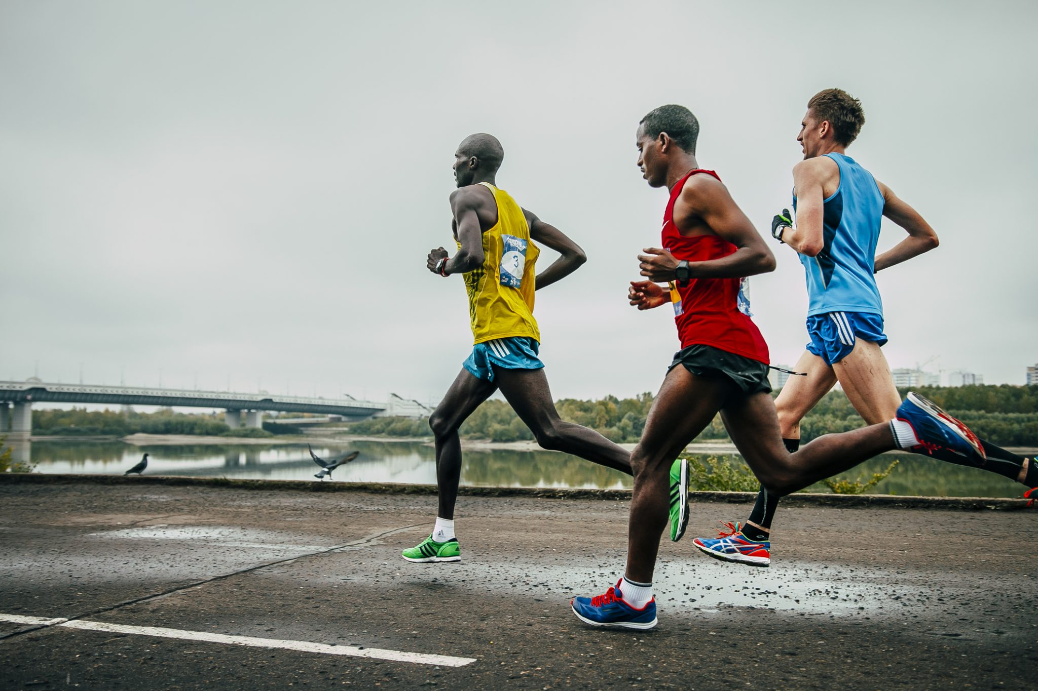 corredores africanos