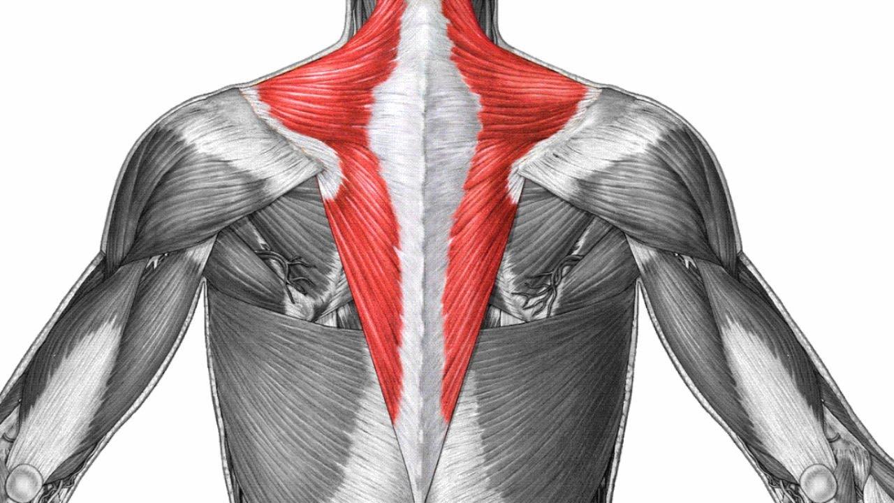 ejercicios para estirar el músculo trapecio